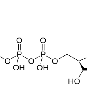 Citicoline (CDP Choline)