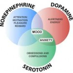 dopamine function on brain